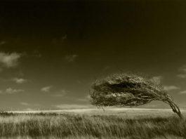 Arboreal_ballet_by_Bob_Farrell