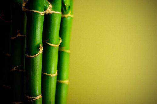 Garr Reynolds - Czego może nas nauczyć bambus - TEDx Tokyo 2011