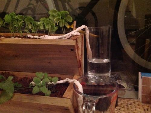"""Jak """"podlewać"""" kwiaty, gdy jesteś na wakacjach - Zanurz końcówki linek w naczyniach z wodą, najgłębiej jak się da"""
