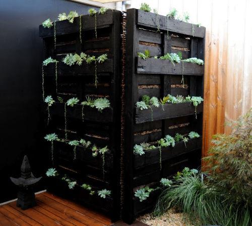7. Domowy ogródek ziołowy