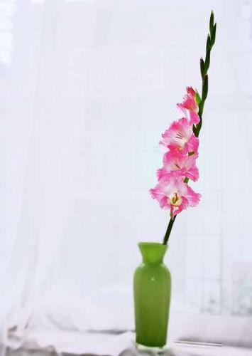 5. Przedłużanie życia ciętych kwiatów