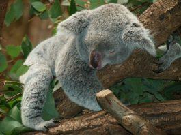 Regularne cykle snu / sen polifazowy: jak spać tylko 4 h dziennie (jak geniusz Leonardo da Vinci)