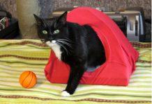 Robimy ze starego T-shirta wygodny domek dla kota