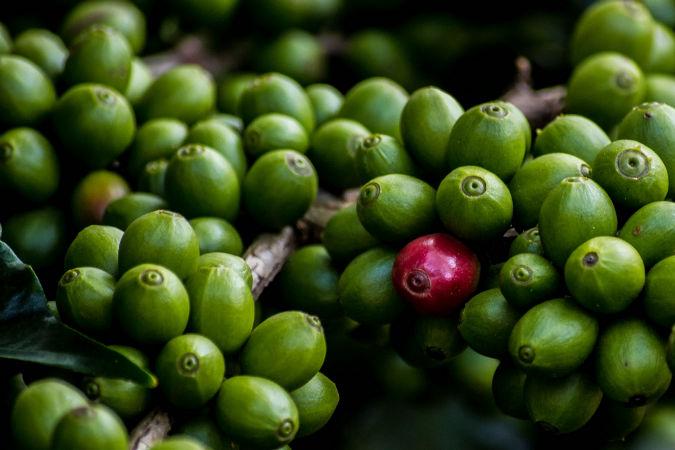 Całkowita historia parzenia kawy