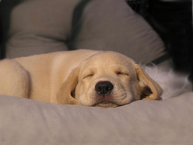 Technika oddychania, która sprawi, że zaśniesz w kilka sekund