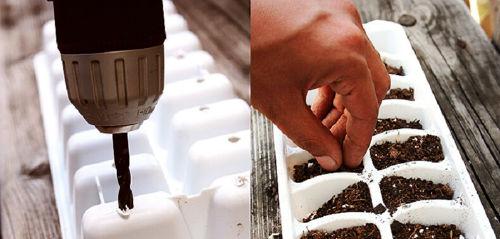 Oto jak wykorzystac tego lata foremki do kostek lodu pojemniki na rośliny rozsada roślin