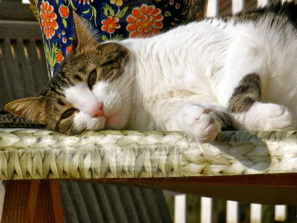 co zrobić żeby kot przestał drapać meble i ściany