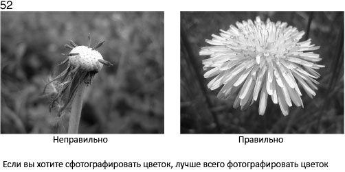 52 Fotografując kwiatek, najlepiej jest skupić się właśnie na nim