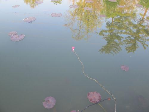 Tampon jako nowy scyzoryk szwajcarski - Zastosowanie nr 10: Spławik do połowu ryb - 3