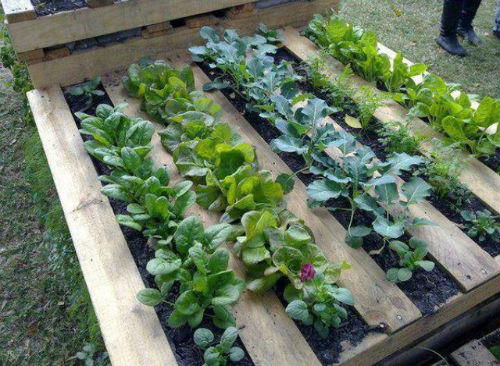 12. Uprawa warzyw - kompostownik
