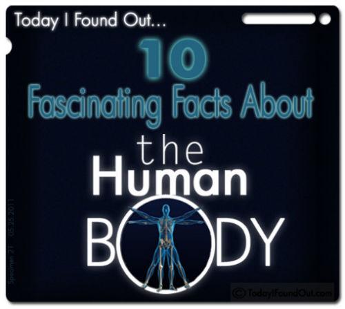 10 fascynujących faktów dotyczących ludzkiego ciała